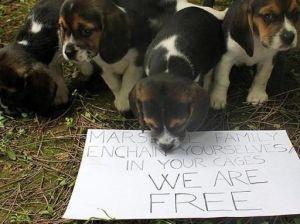 we_free